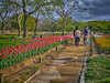 Photo:チューリップの花園で I By jun560