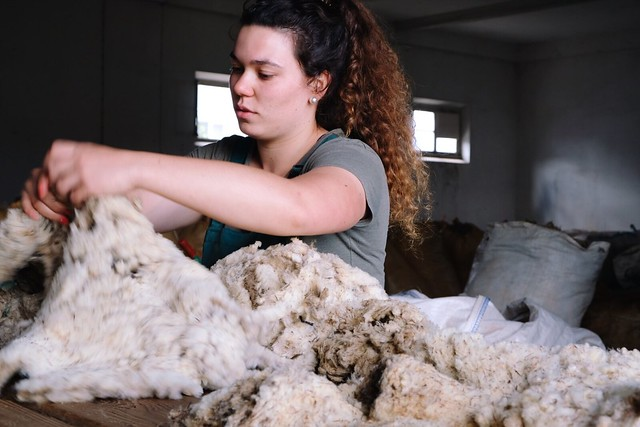 sorting and grading fleece