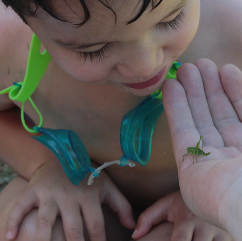 Keiki looks at the bush cricket