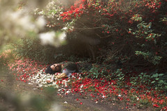 Image by aleah michele (-si-tu-savais-) and image name The floral knight photo  about Adorned in azaleas