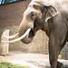 <p><a href=&quot;http://www.flickr.com/people/28703702@N08/&quot;>djsmith46</a> posted a photo:</p>&#xA;&#xA;<p><a href=&quot;http://www.flickr.com/photos/28703702@N08/28056221307/&quot; title=&quot;Berlin Zoo-14&quot;><img src=&quot;http://farm2.staticflickr.com/1824/28056221307_8526456d7a_m.jpg&quot; width=&quot;180&quot; height=&quot;240&quot; alt=&quot;Berlin Zoo-14&quot; /></a></p>&#xA;&#xA;<p>OLYMPUS DIGITAL CAMERA</p>