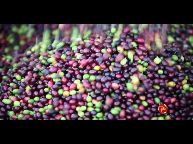 CAFÉ COM TV | Cooperativas ajudam no desenvolvimento e sustentabilidade das fazendas