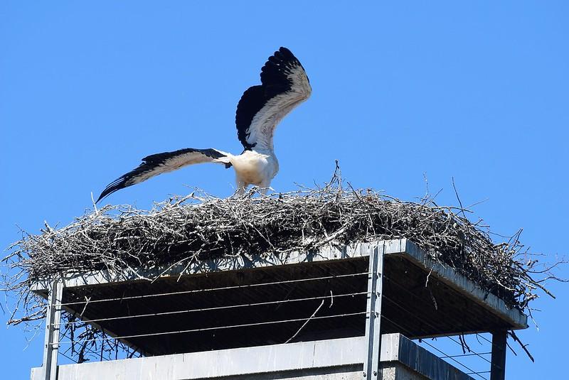 Storks 22.06 (1)