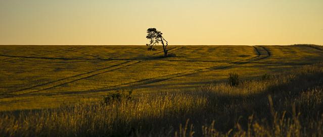 lone tree, Sony ILCE-7M2, Sony 70-300mm F4.5-5.6 G SSM (SAL70300G)