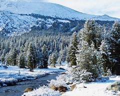 Last Snow, Tuolumne River, Yosemite NP 2015