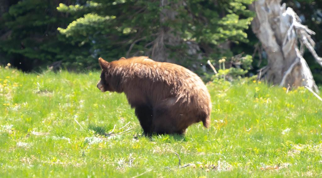 Bear poop (1 of 1)