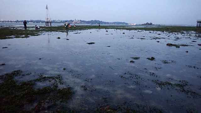 Dugong feeding trail in seagrass meadows, Chek Jawa Jul 2018
