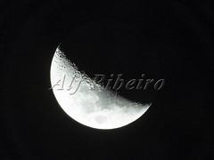 Alf Ribeiro 0253-11