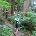 A little walk through the woods to a beach on the Sunshine Coast
