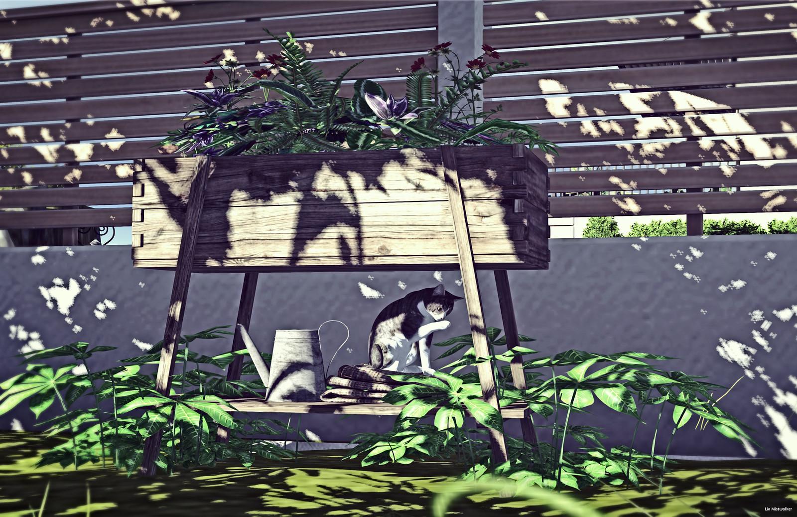 Home & Garden Therapy # 709