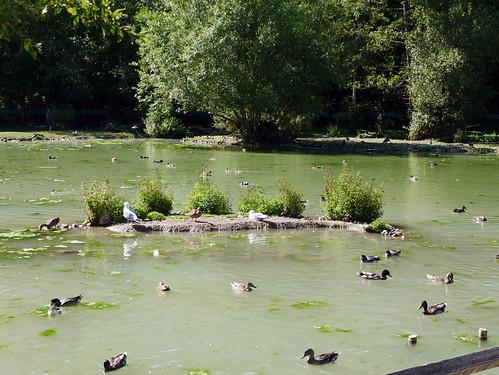 Home for Ducks