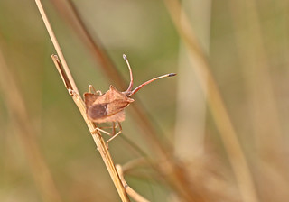 Squash Bug - Michael Bird