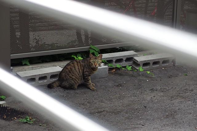 Today's Cat@2018-07-06