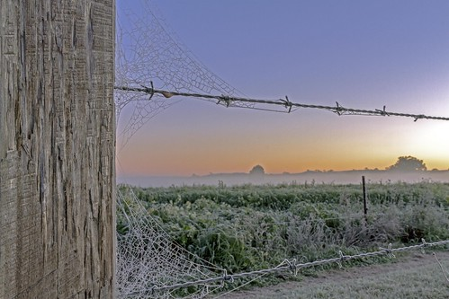 Ice on the Barbwire
