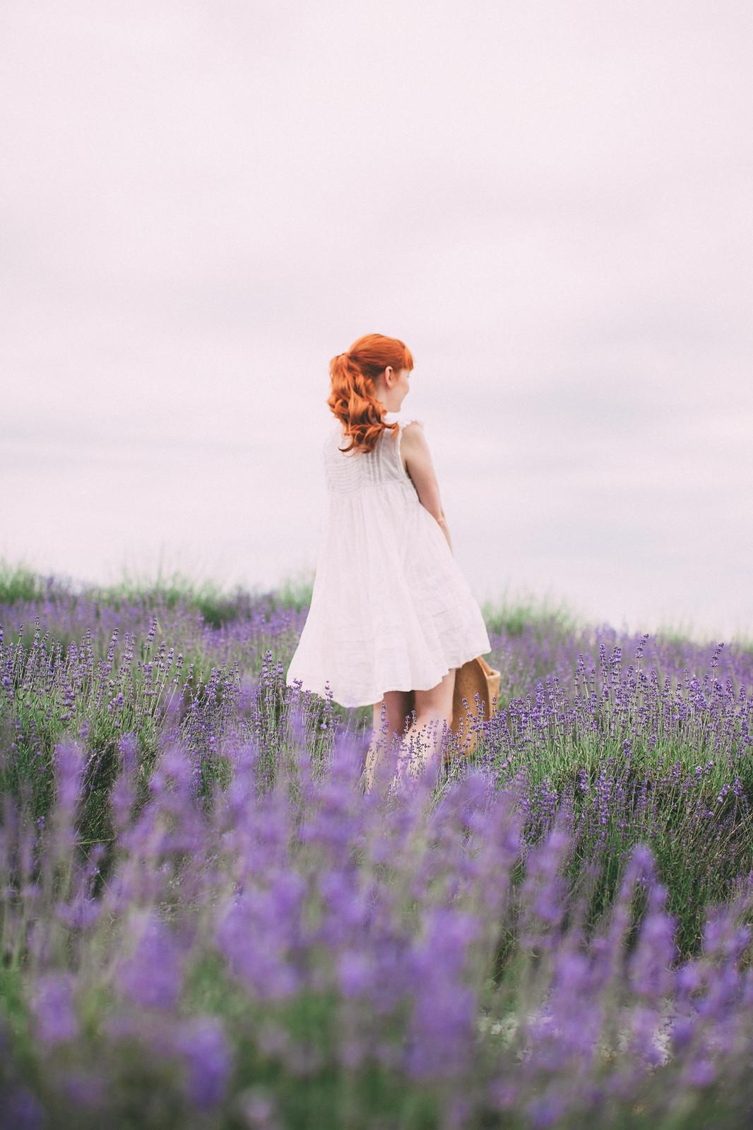 lavender-11