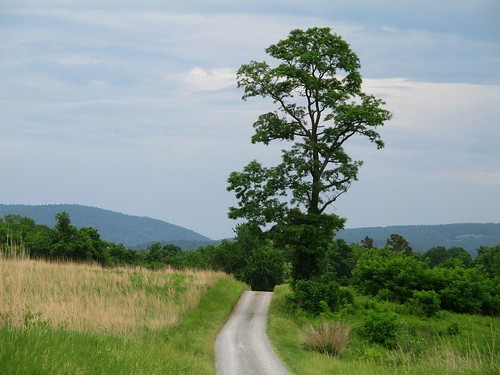 path statearboretumofvirginia clarkecounty virginia