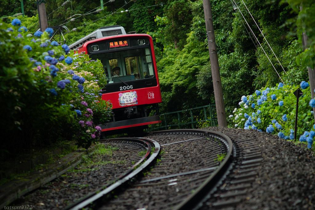 2018-06-15 箱根登山鉄道と紫陽花 004-2