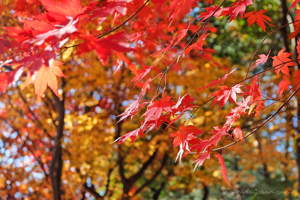 autumn_leaves_closeup