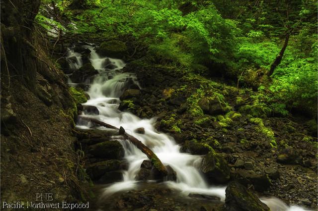 Wilderness Creek 0662
