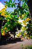 夏日盛開(Yellow flowers in Bloom) | 台南321巷藝術聚落
