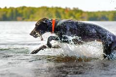 099 Piper the lake monster