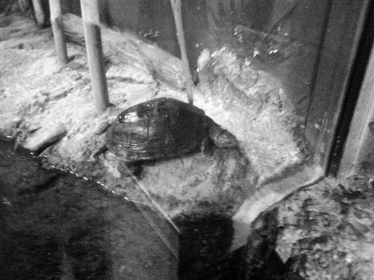 Columbus Zoo BW 5-31-2014 2-52-46 PM