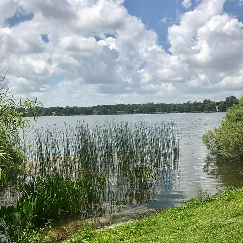 florida grass clouds water lake collegecampus rollins rollinscollege summer sky