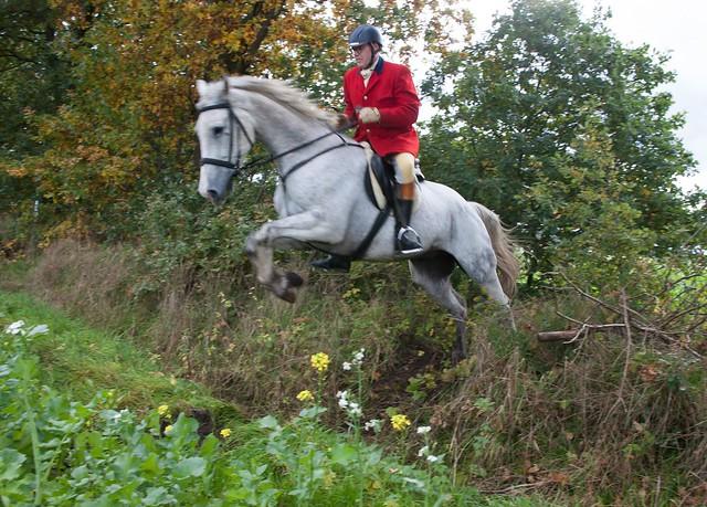 Midland Hunt Landhorst 2015-9020