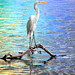 Great Egret with rainbows