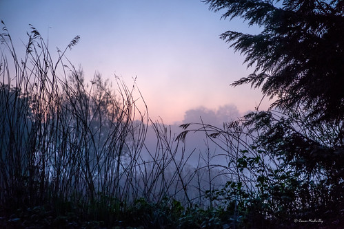 sunrise dawn mist field countryside colour landscape darknessintolight maynooth kildare ireland pietahouse depression anxiety