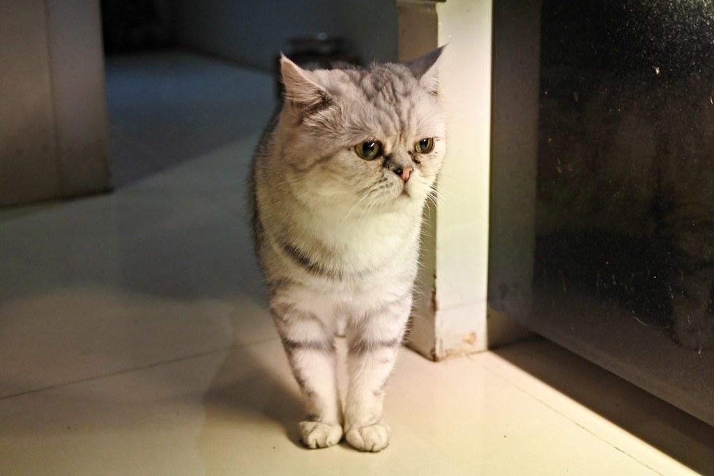 【新北|樹林】No.15事啡之地 愛貓咪和咖啡的你不能錯過-雪花新聞