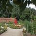 Guy's Cliffe Walled Garden