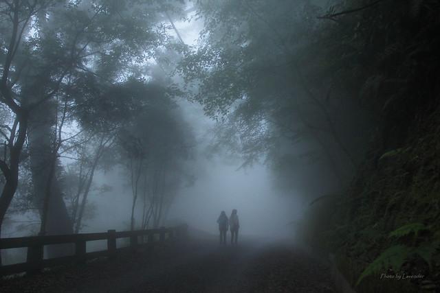 迷霧森林 - Foggy forest, Canon EOS 500D, Canon EF 17-40mm f/4L