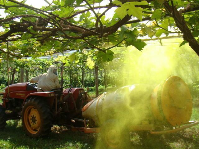 Multinacionais agroquímicas controlam cerca de 68% de todo o fornecimento comercial de sementes - Créditos: Foto: Reginaldo Teodoro de Souza/Embrapa