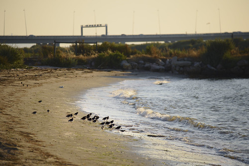 Late afternoon in Tagus south bank  #tagus #tejo #nature #portugal #t3mujinpack