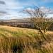 Musbury Valley