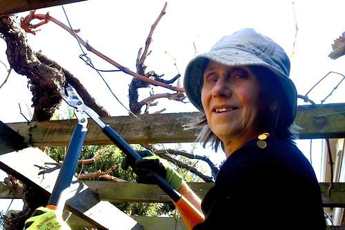 In 2018 Jill pruned our grape vines in mid June