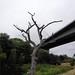 Tree at Willowgate DSCF2883