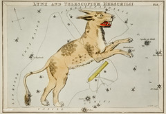 Sidney Hall's (1831) astronomical chart illustration of Lynx and the Telescopium Herschilii. Original from Library of Congress. Digitally enhanced by rawpixel.