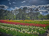 Photo:チューリップの花園で XIV By jun560