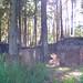 Barley, Aitken Wood - Pendle Sculpture Park (10)