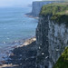 Seabirds nesting at Bempton Cliffs