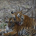 Maya and her cub