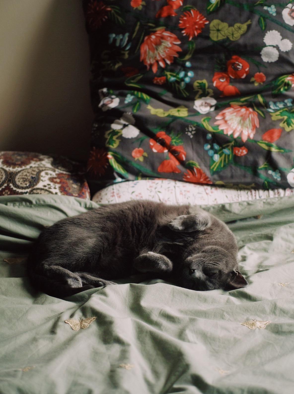 grey cat sleeping on bedsheets