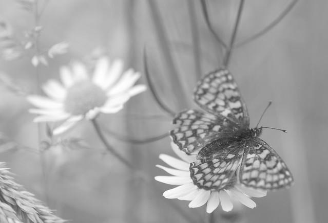 Sur les ailes d'une fleur