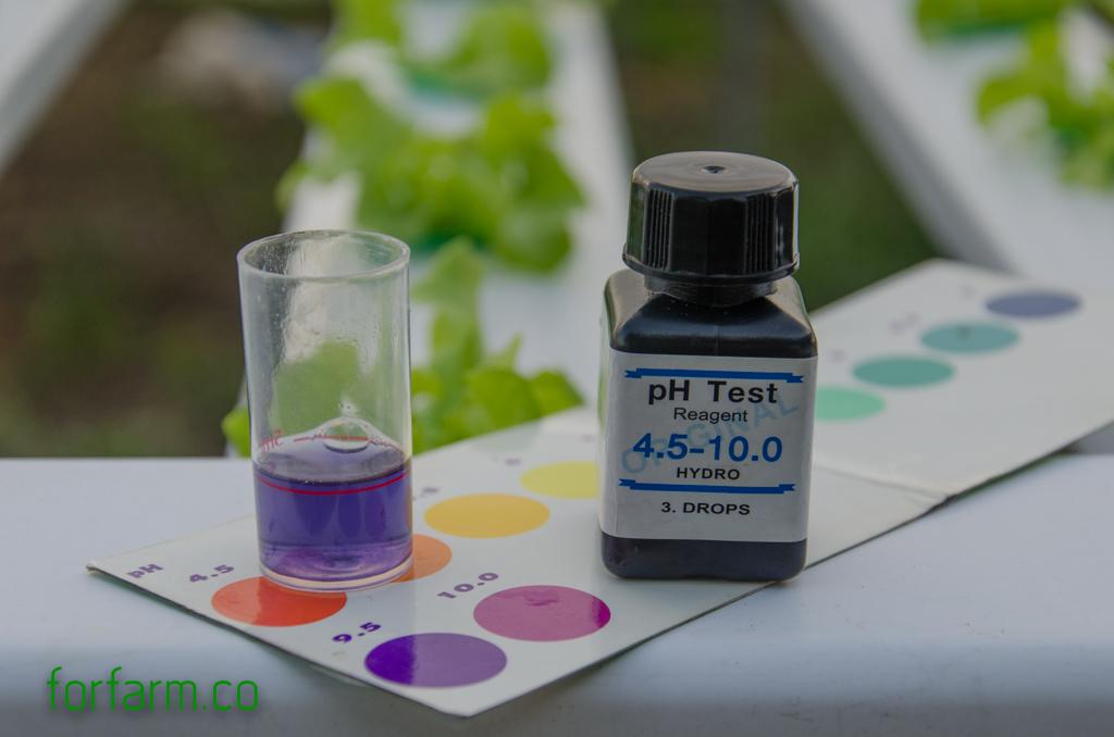 ปลูกผักไฮโดรโปนิกส์ให้โตไว ควรใส่ใจค่า pH (กรด-ด่าง)