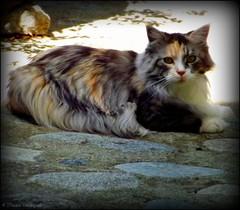 Le chat d'Eüs