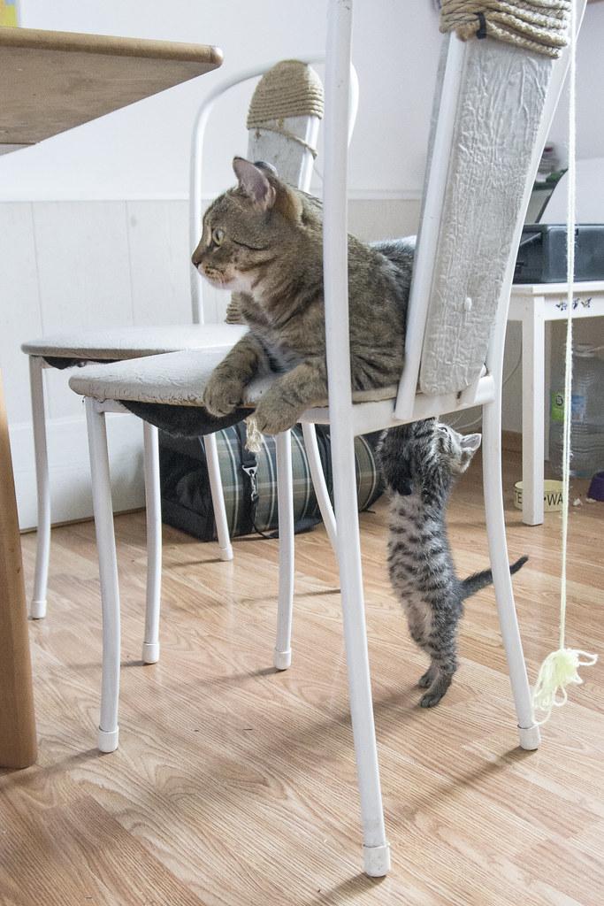 Коты_9
