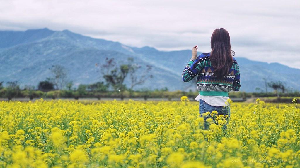 rapeseed_flowers_taitung_chishang