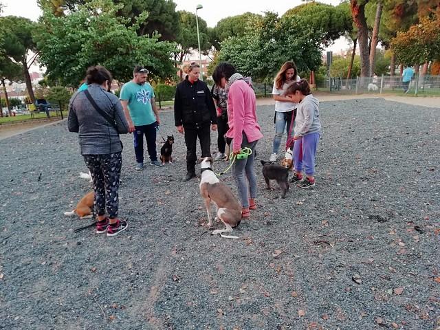 Curso de adiestramiento canino básico del Ayuntamiento